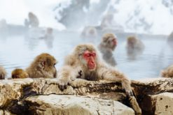 monkey-park-winter