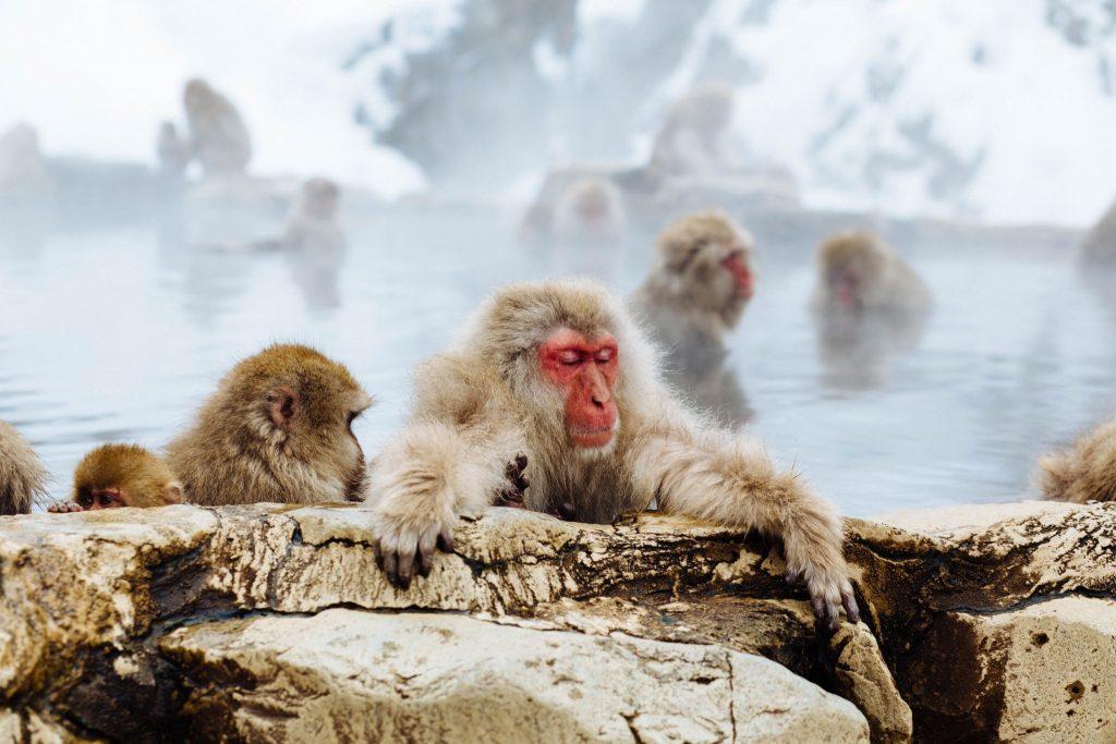monkey-park-winter